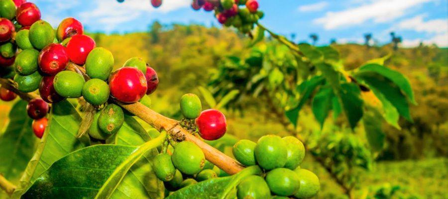 кофе колумбия